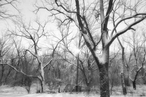 First Snowfall December 20, 2012