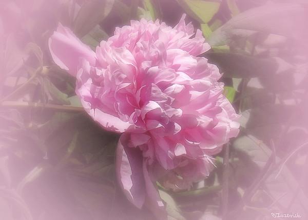 In The June Garden